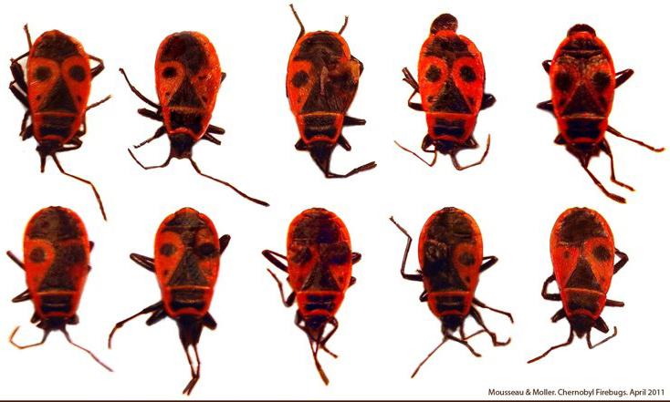 Chernobyl fire bugs