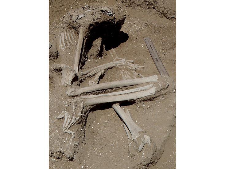 pregnant-fossil.jpg