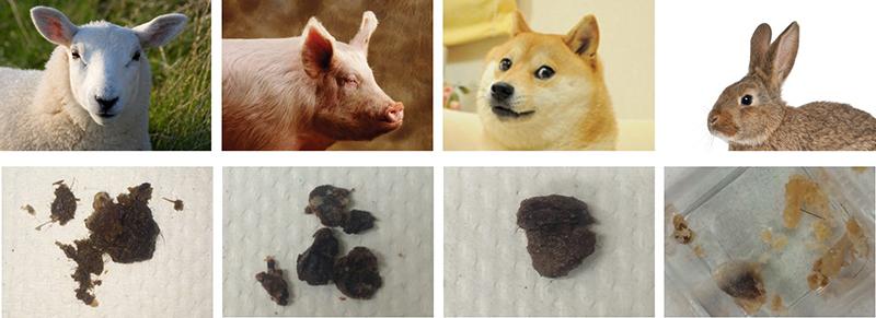 earwax-in-different-animals.jpg