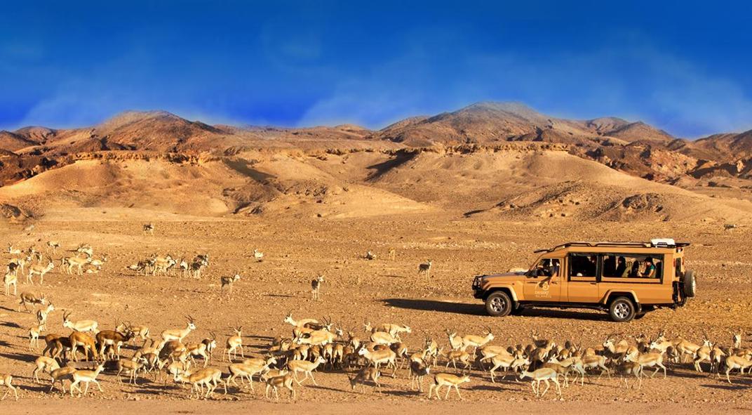 Abu Dhabi Safari