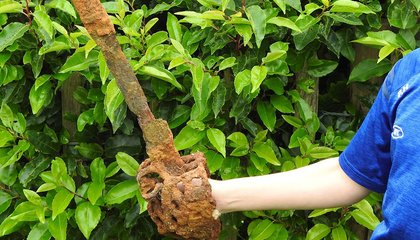 Using a Metal Detector, 10-Year-Old Boy Finds Centuries-Old Sword in Northern Ireland  image