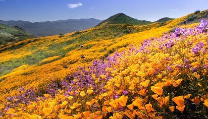 Southern California Will Soon See Another Booming Superbloom image