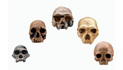 An Evolutionary Timeline of Homo Sapiens image