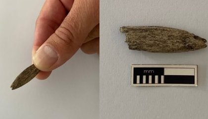 Rare Ancient Tool Found in Australia May Have Been Made With Kangaroo Bone image